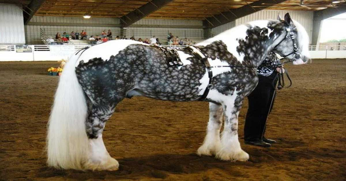 24 Horses With The Most Beautiful And Unique Colors In The