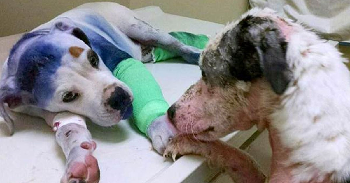 abused_dog_comforts_fellow_rescue_featured