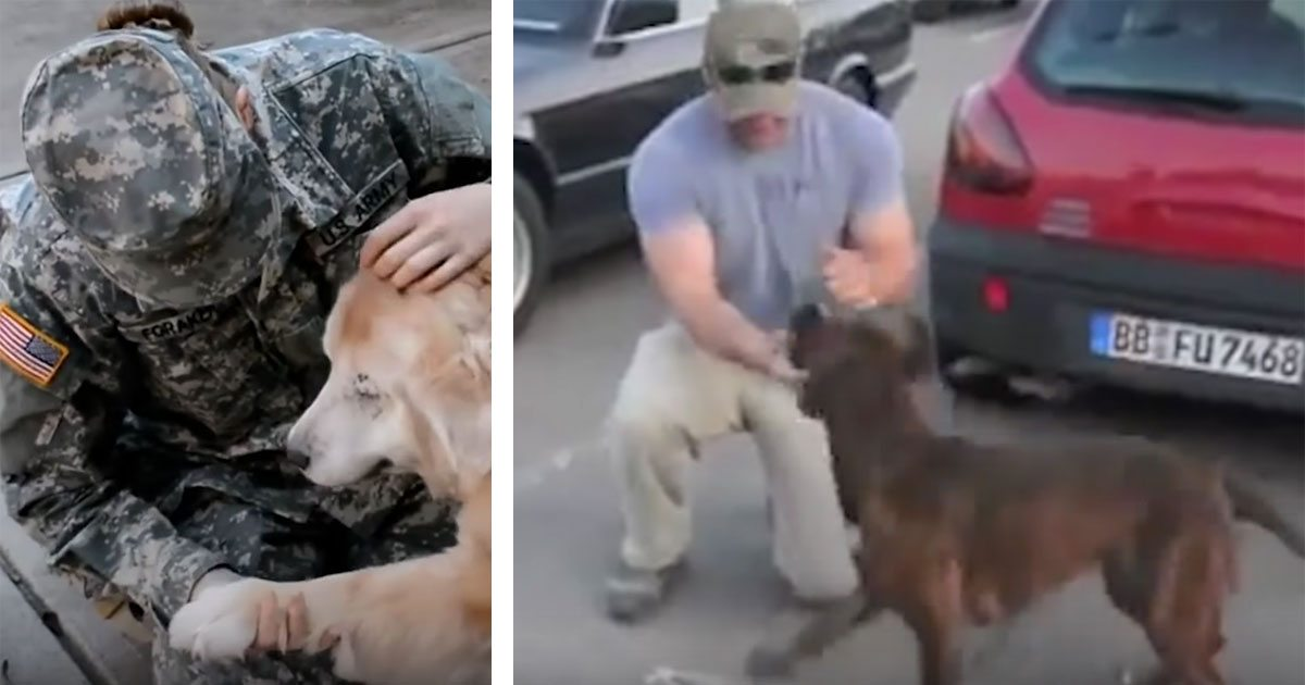 dogs_greeting_veterans_compilation_featured
