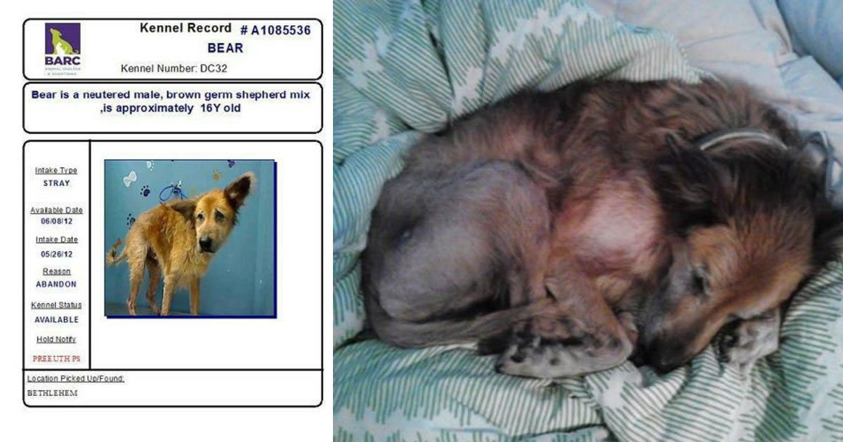 norman_bear_dog_rescue_featured