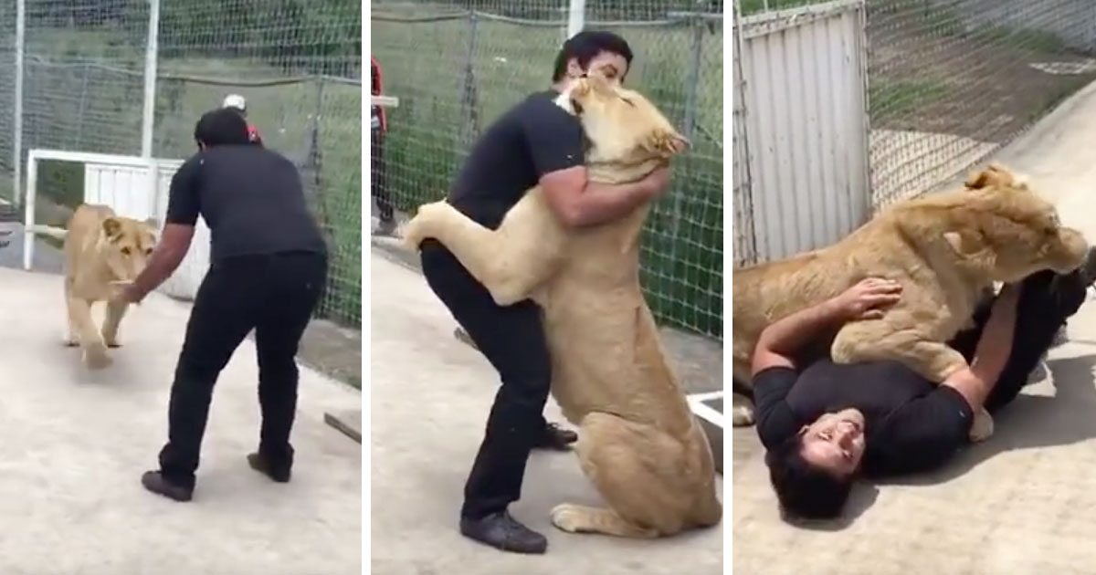 lioness_man_who_adopted_her_featured