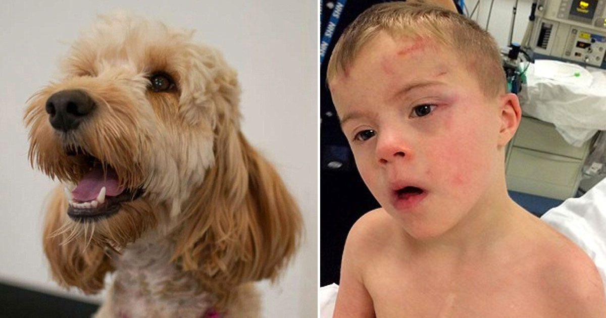 family_dog_saves_rileys_life_featured