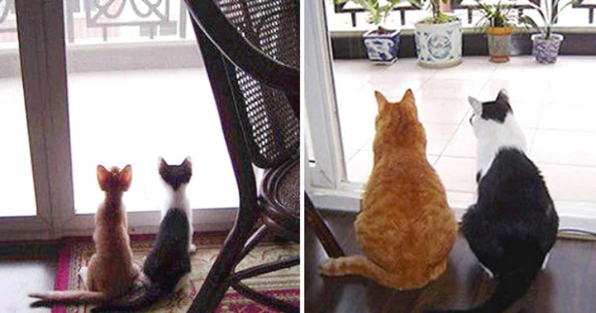 cats_before_after_rescue_featured