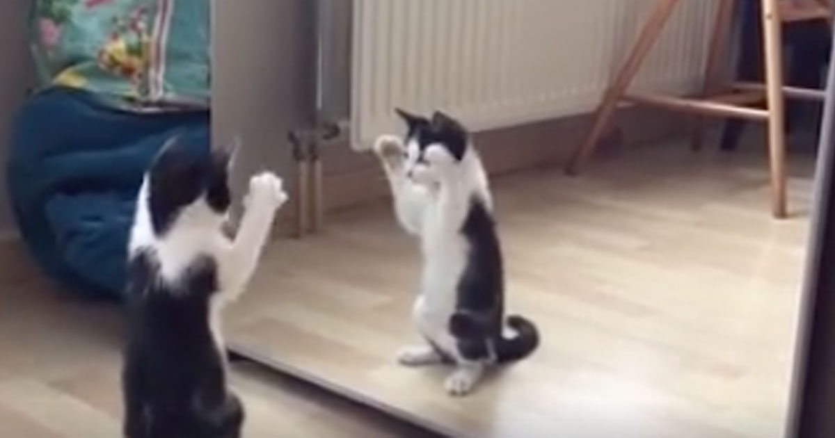 kitty_sees_itself_in_mirror_featured