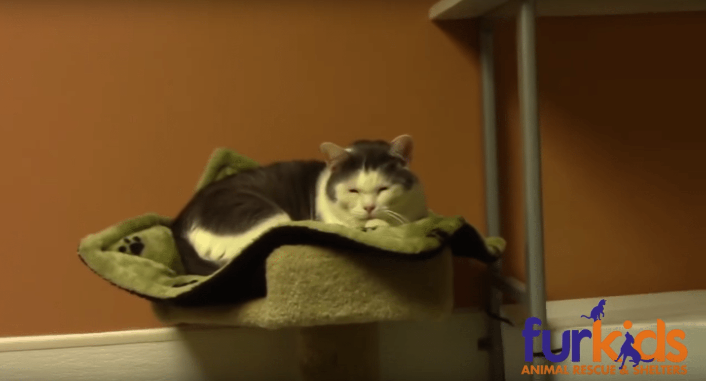 Animal Shelter Makes Hilarious Lowbudget Commercial Never - Animal shelter makes hilarious low budget cat commercial that ends up going viral