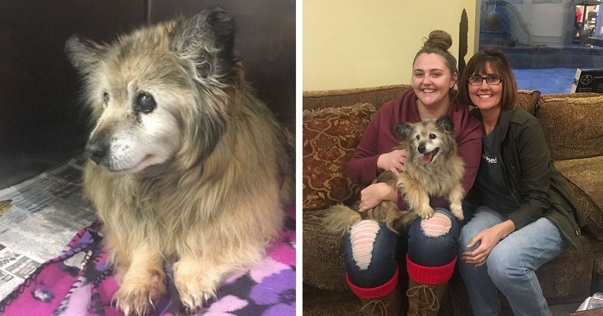 Woman sees sad senior dog's photo on Facebook, drives 2 hours to adopt him