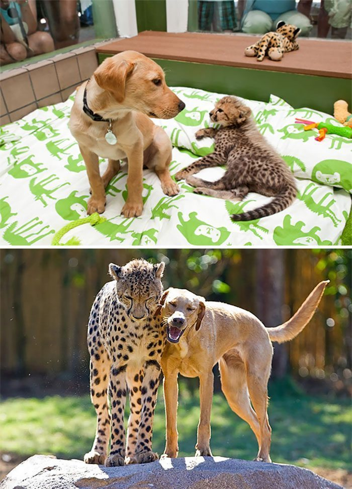 Animal-1- - Best Friends Through and Through - Photos Unlimited