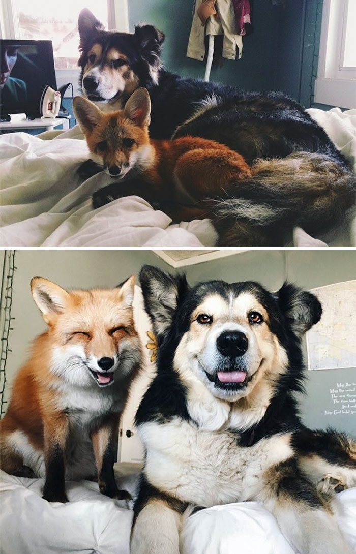 Animal-2- - Best Friends Through and Through - Photos Unlimited