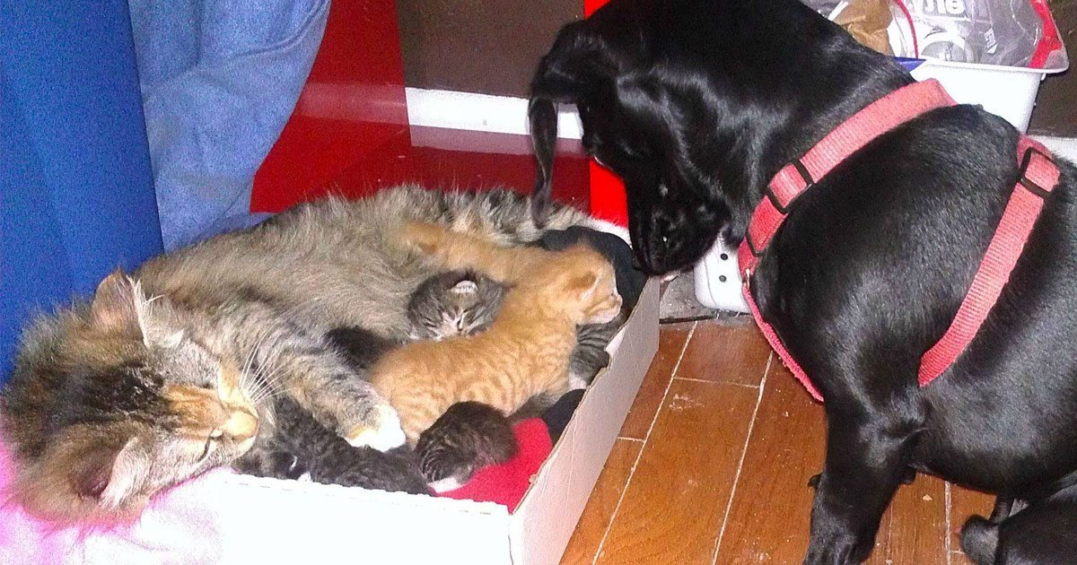 dog_father_7_kittens_featured