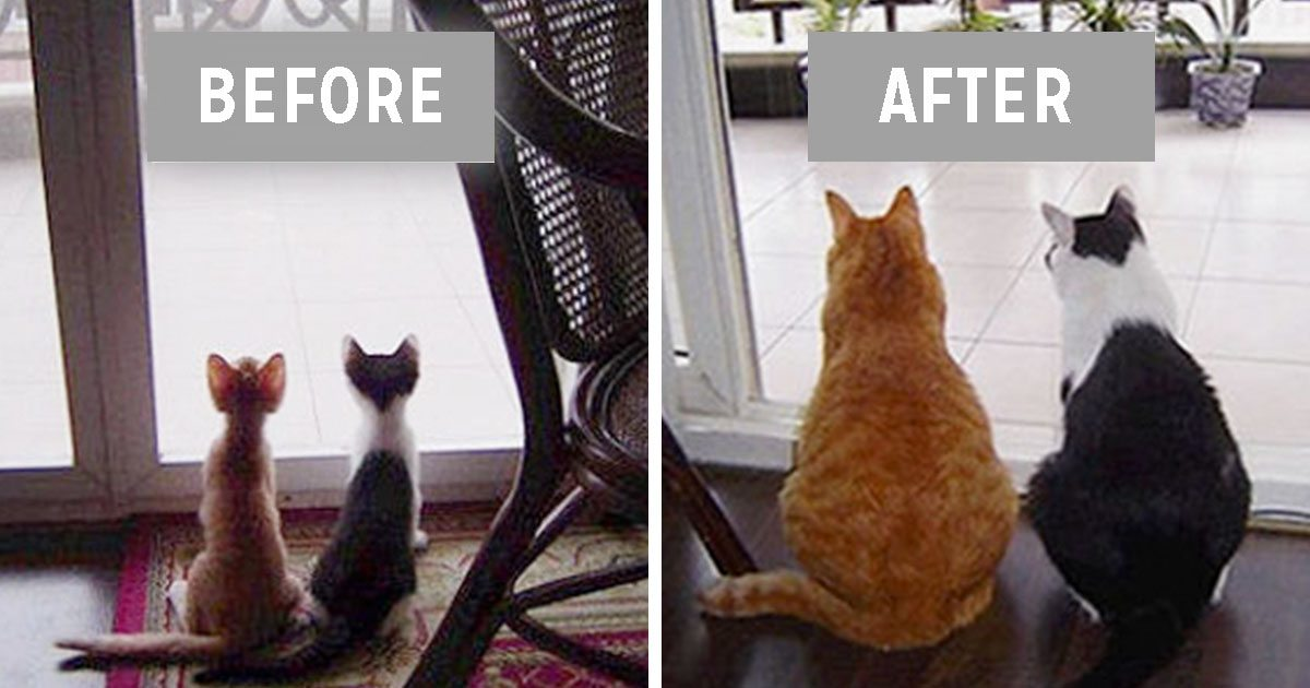 animal_friendships_then_and_now_featured