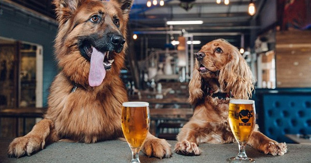 brewery_pawternity_leave_featured