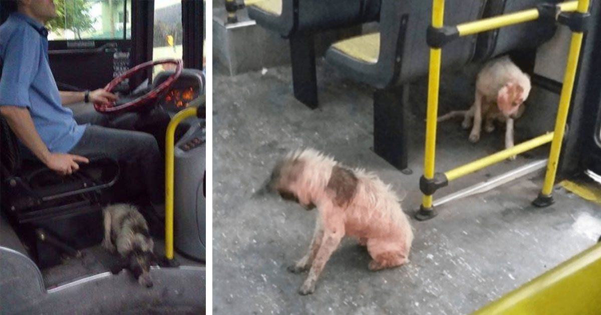 bus_drivers_dogs_storm_featured