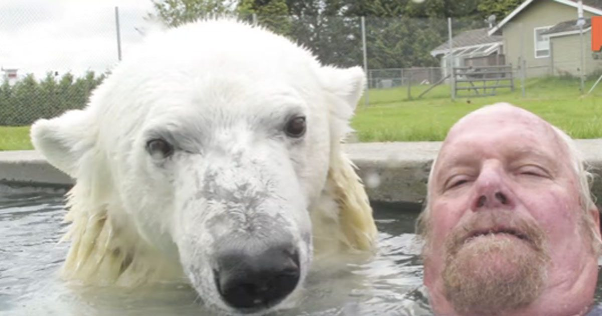man_swims_with_polar_bear_featured