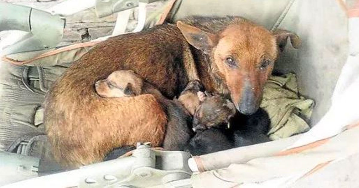 stray_dog_saves_baby_infant_featured