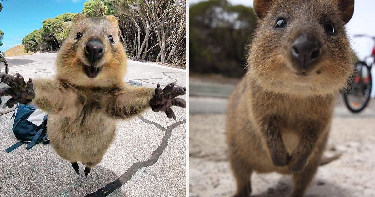 happy_quokkas_featured