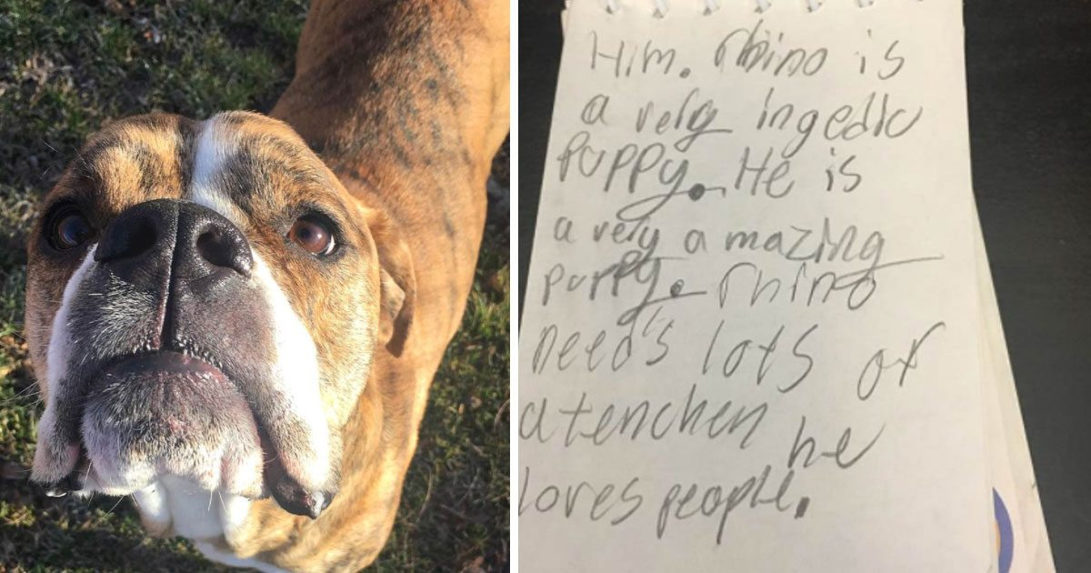 dog_shelter_heartbreaking_letter_featured