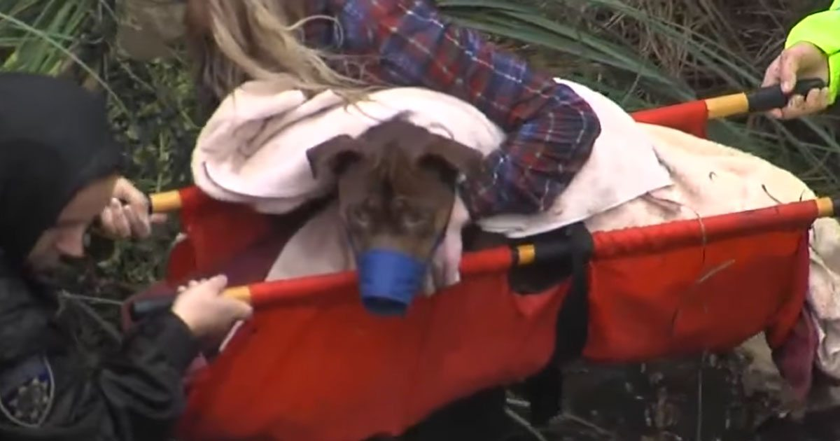 dog_rescued_from_canyon_featured