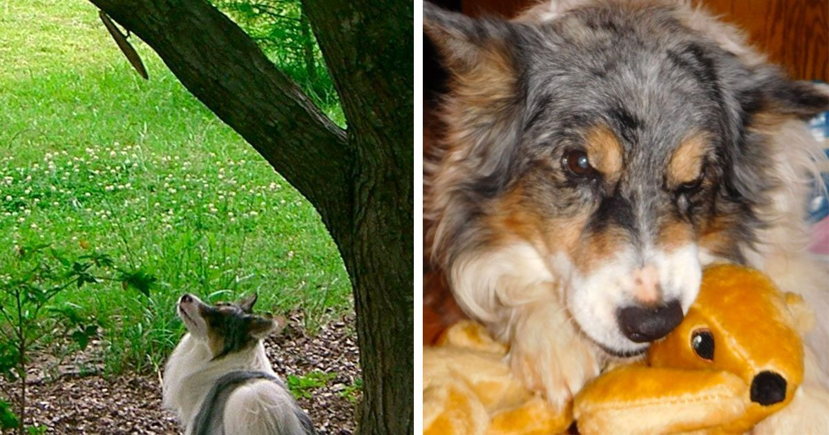 dog_gets_his_own_squirrel_featured