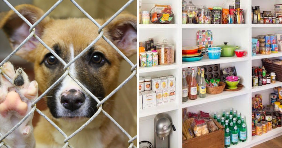 things_to_donate_to_animal_shelter_featured
