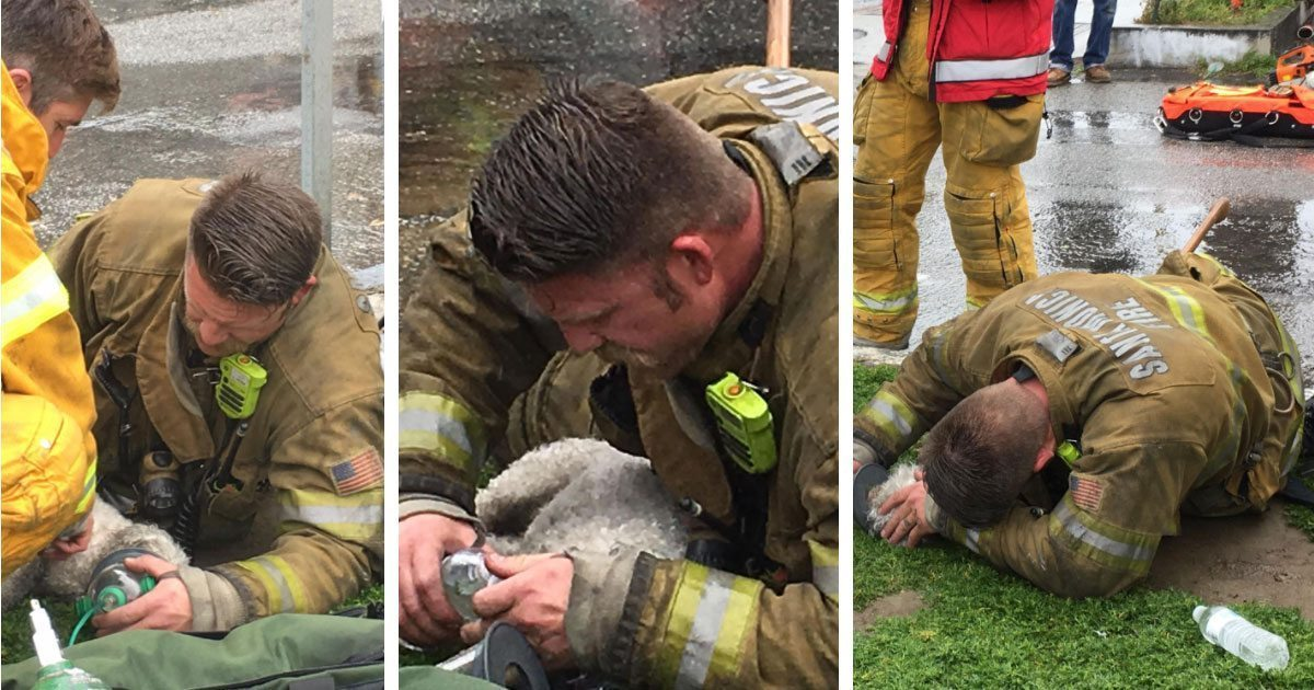 firefighters_rescue_dog_apartment_fire_featured