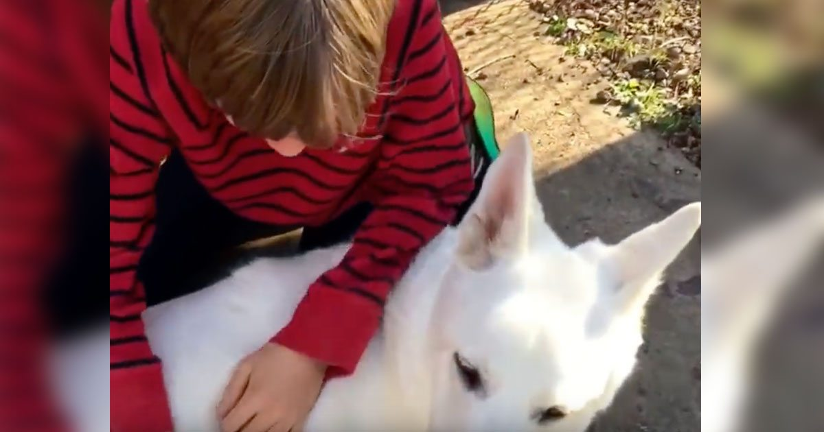 boy_reunites_with_neighbors_dog_featured