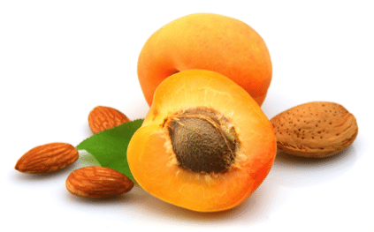 apricot_kennel_oil