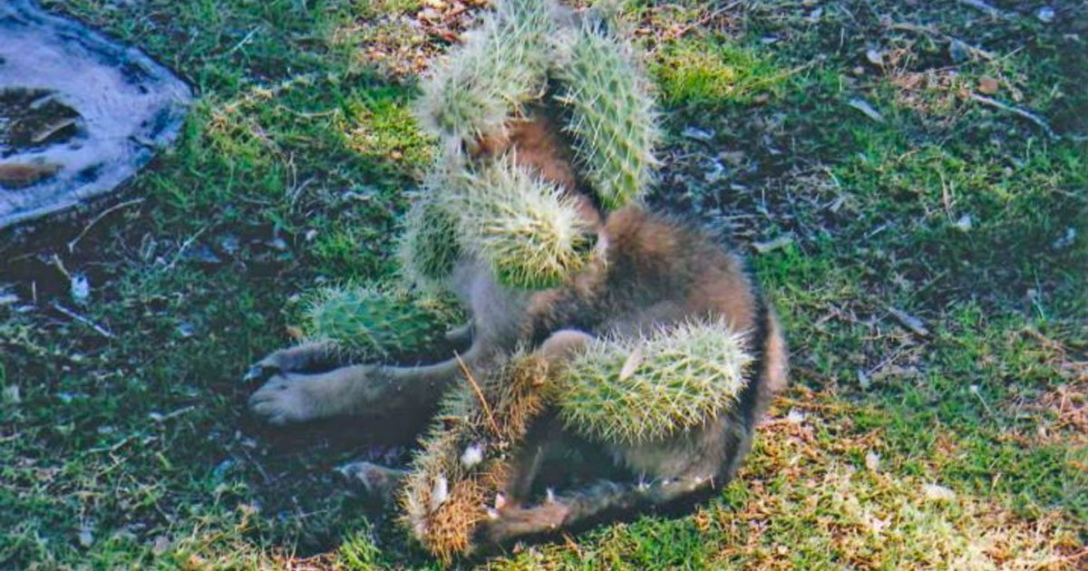 cactus_covered_animal_featured
