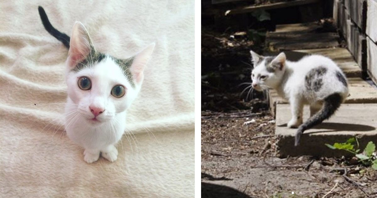 rescuer-takes-cat-home-with-only-two-legs-is-amazed