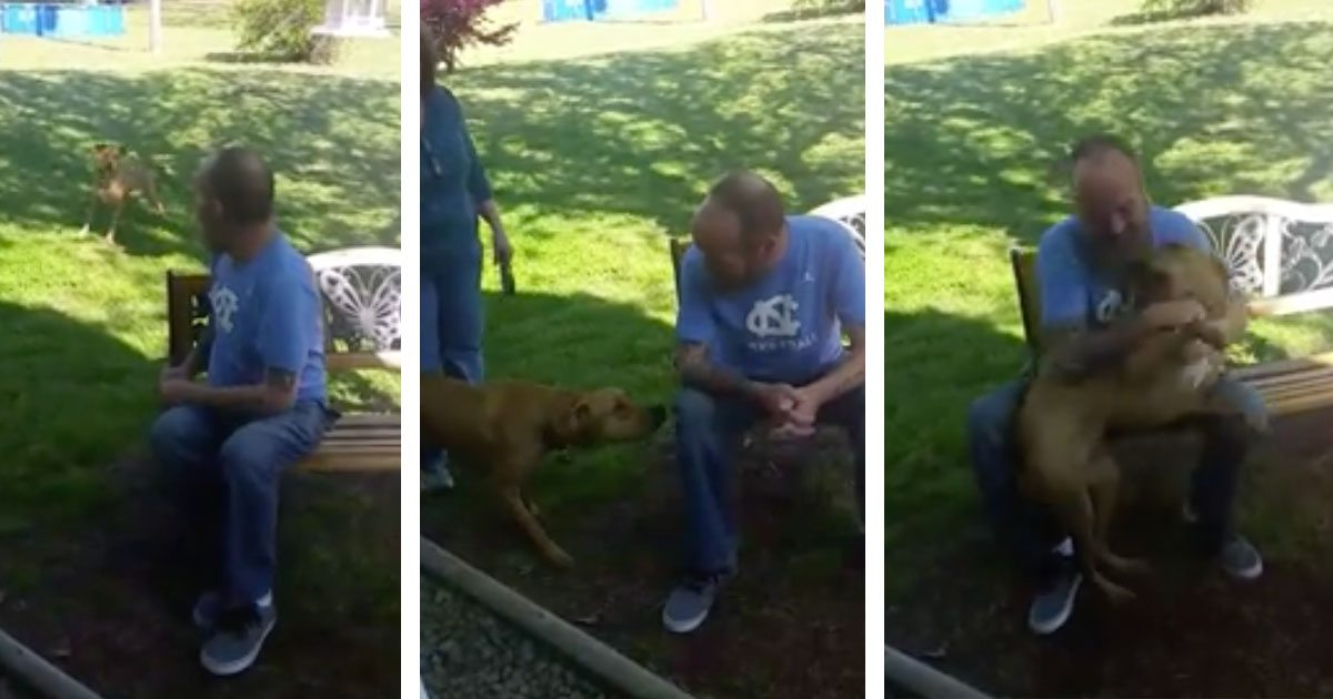 dog_reaction_owner_losing_weight_featured