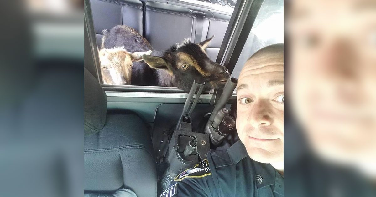 cop_picks_up_goat_womans_garage_featured