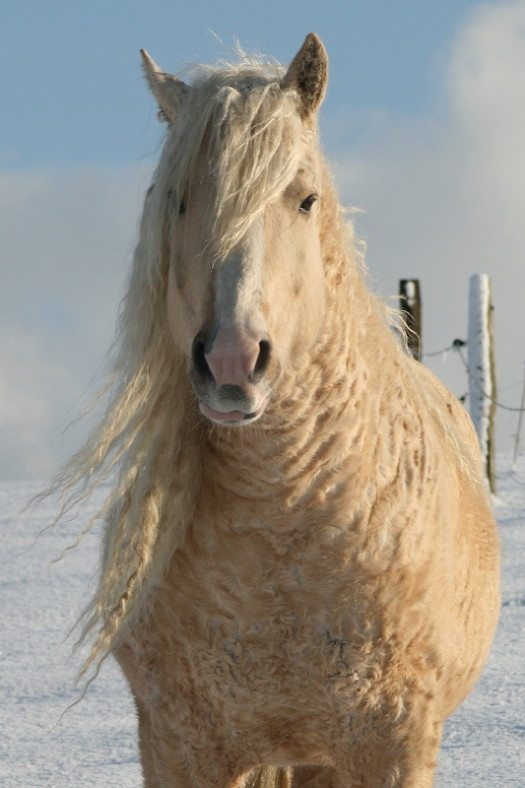 10-curly-horse