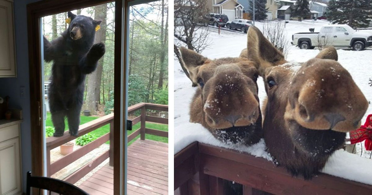 animals_saying_hello_featured