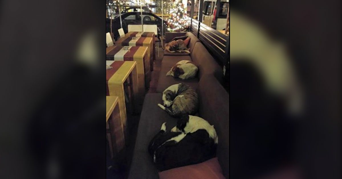 dogs_greece_coffee_shop_featured