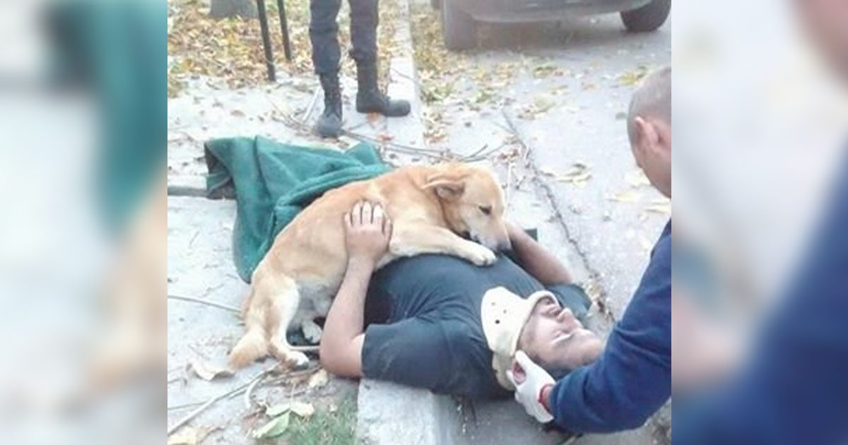 dog_hugs_injured_owner_featured
