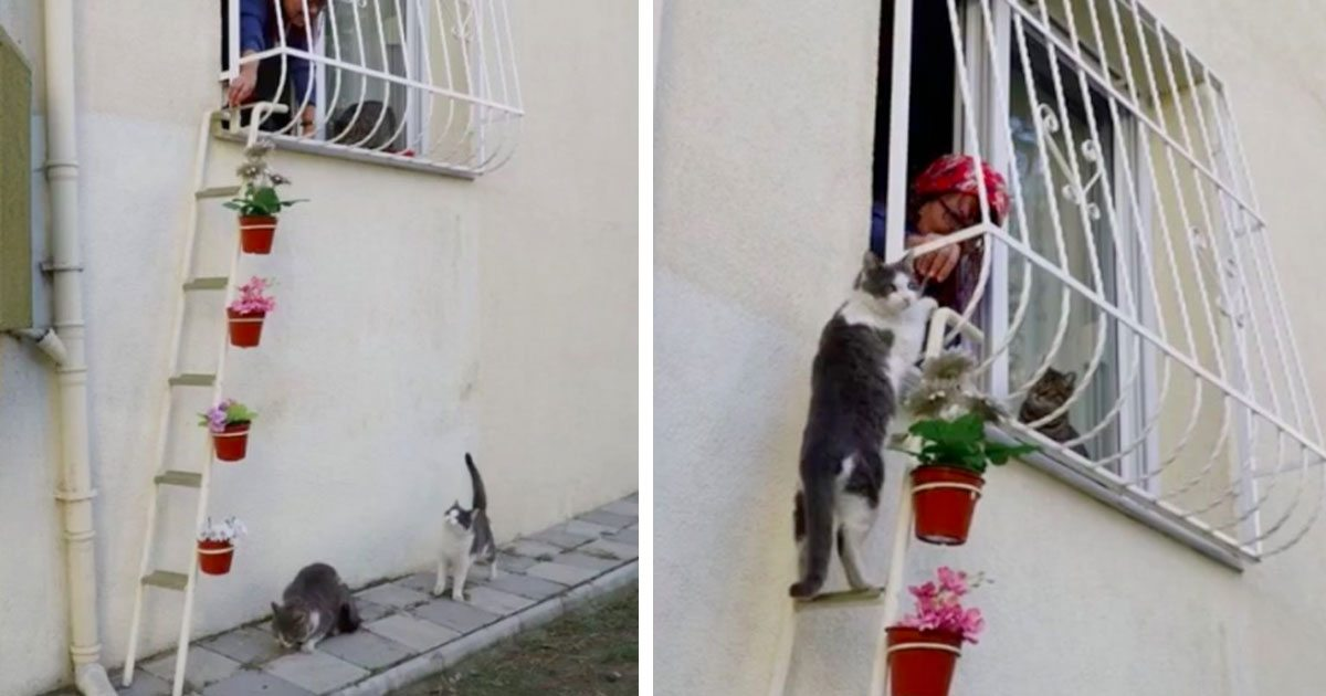 Animal Lover Builds Cat Ladder So Strays Can Come Into Her Home