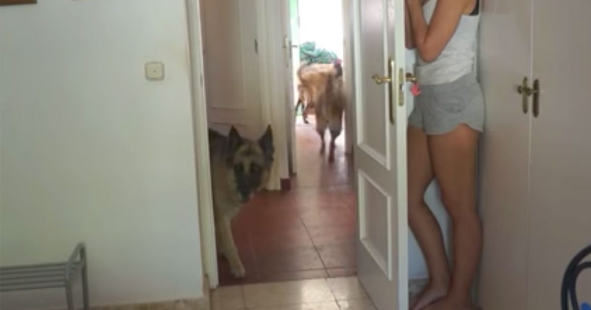 hide_and_seek_dogs_featured