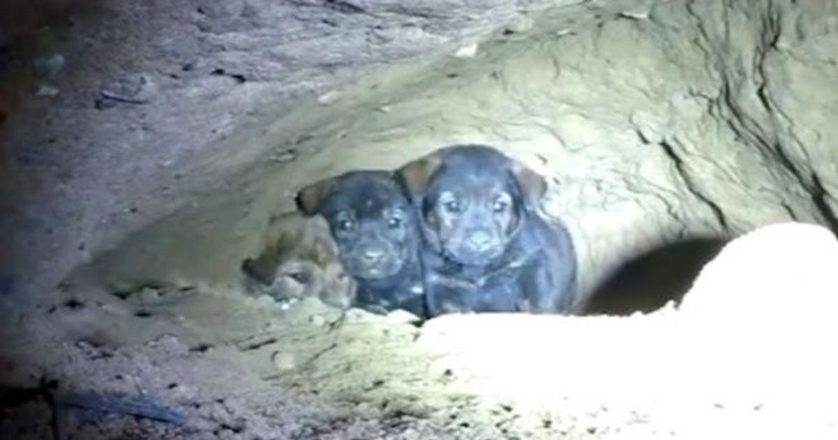 puppies_cave_trapped_featured