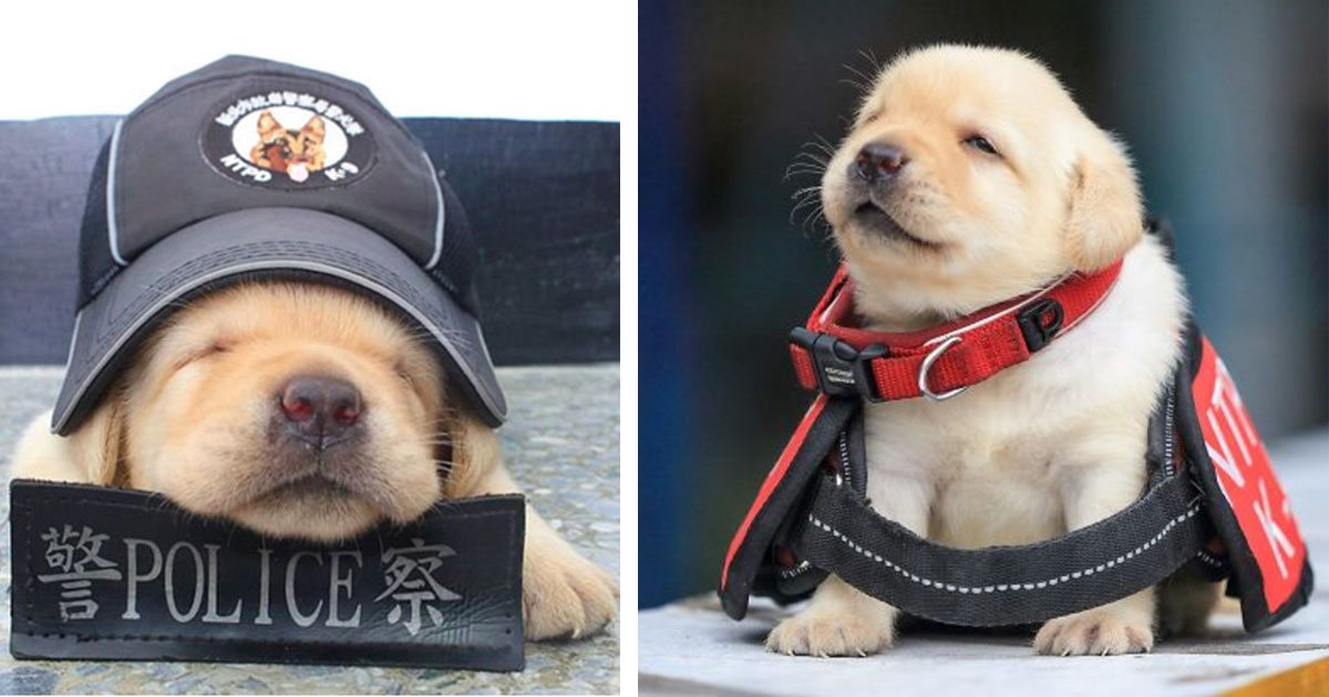 taiwan_police_recruits_puppies_featured