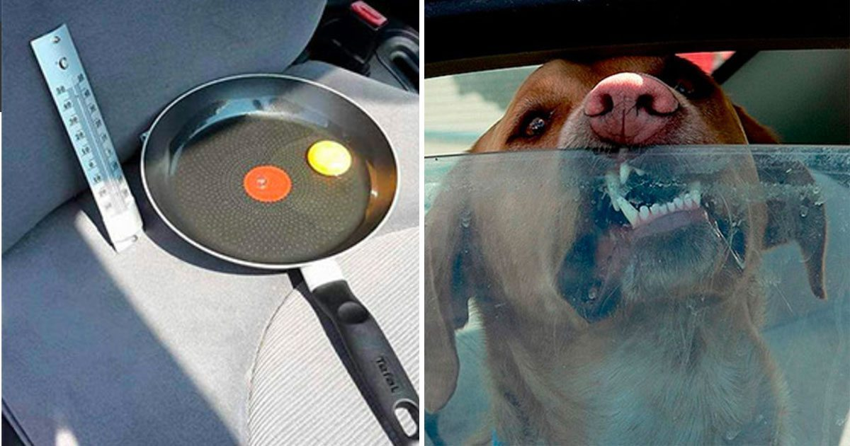 fried_egg_dog_in_hot_car_featured