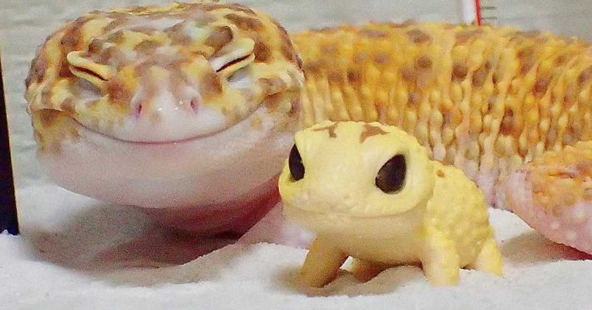 gecko_toy_gecko_featured