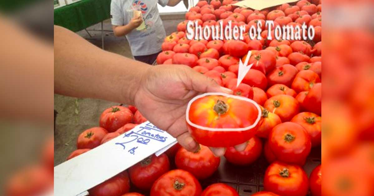 how_to_pick_perfect_tomato_featured