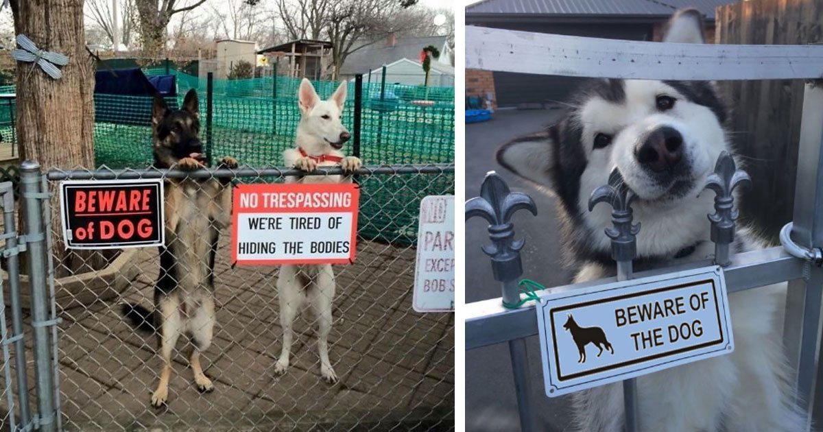 vicious_dogs_beware_of_dog_signs_featured