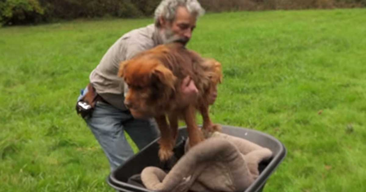 chained_dog_grey_muzzle_rescue_featured