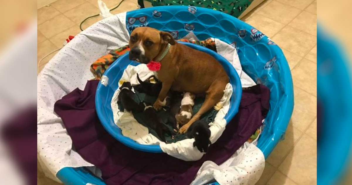 mama_dog_adopted_10_puppies_featured