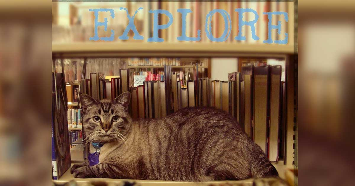 cat_fired_library_internet_rescue_featured