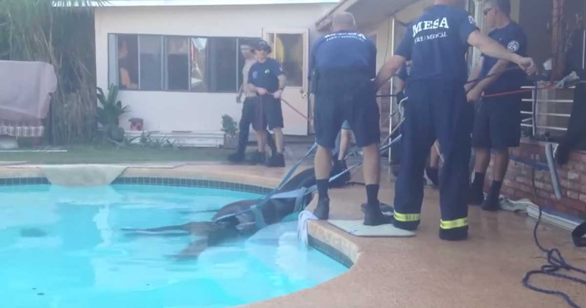 firefighters_save_drowning_horse_featured