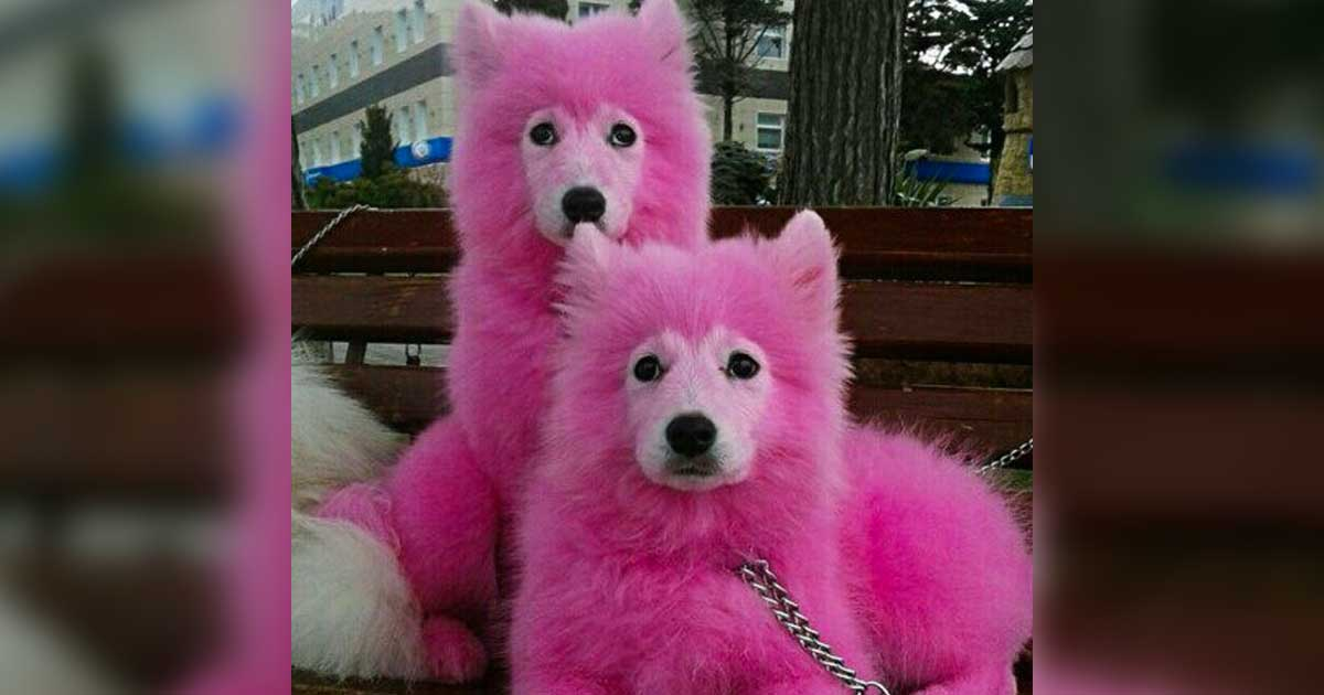Dogs Dyed Pink Rescued From Forest - photo#25