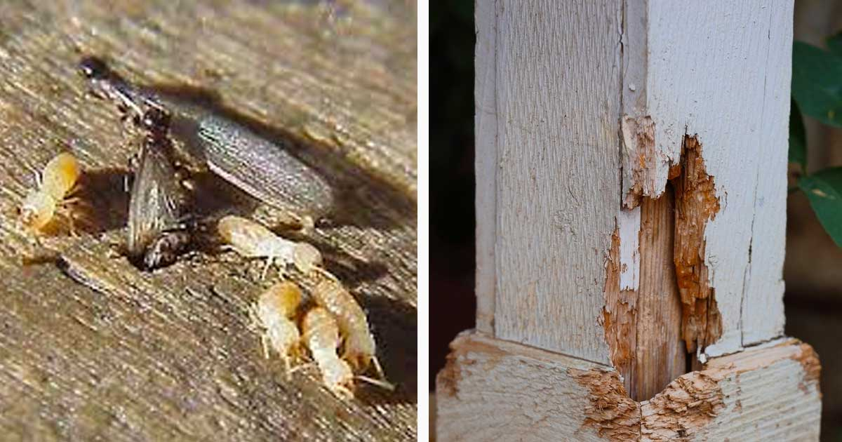 termite_remedies_featured