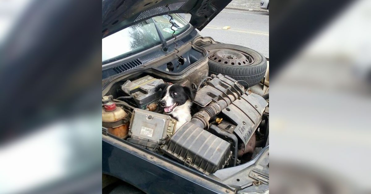 dog_hiding_in_engine_featured