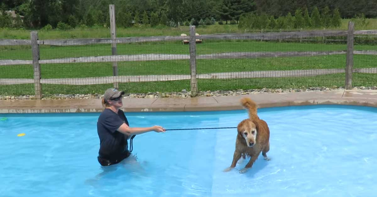 old_dog_learns_swim_featured